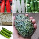 Balcony cucumber seeds 100true cucumber seeds varieties complete green fruits and vegetables   50 p