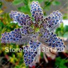 1111 Promotion  100  PCS Rare Succulents Seeds Spotted Flowers Easy to Grow In door Potted Plant fo