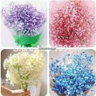 50 pcs 5 colors all over the sky star seeds, mantianxing rare bonsai flowers plants, starry flower