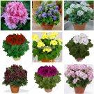 50pcsbag Rare geranium seeds Variegated Geranium seed winter garden flower for bonsai potted plant