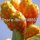 Promotion 200 pcs Prickly pear cactus  edible fruit seeds flower garden bonsai,Opuntia Leptocarpa,