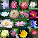 Lotus Seeds Aquatic plants blossom Water lily seed Bonsai plants Seeds for home  garden 5 seedsbag