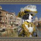 Border Collie Fine Art Canvas Print - Casanova in Venice