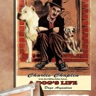 Dogo Argentino Poster Canvas Print  -  A DOG'S LIFE Movie Poster