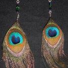 peacock life