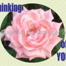 Thinking of You Pink Rose Printable Greeting Note Card Blank inside