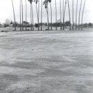 Palm Tree Row (2)