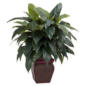 Cordyline w/Decorative Vase