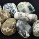 1 Lb Tree Agate tumbled stones - GTTREAB