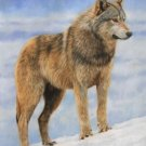 WOLF New DAVID STRIBBLING limited edition print