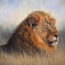 LION New DAVID STRIBBLING Limited Edition Wildlife Print