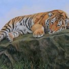 TIGER CUB New DAVID STRIBBLING Ltd Ed Wildlife Print.