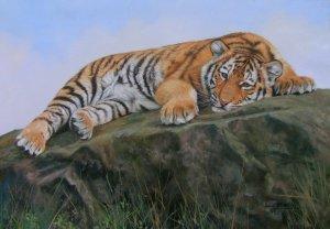 TIGER CUB New DAVID STRIBBLING Ltd Ed Wildlife Print.