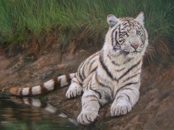WHITE TIGER New DAVID STRIBBLING Ltd Ed Wildlife Print.