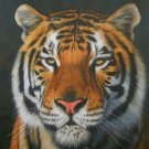SET of 3 DAVID STRIBBLING Limited Edition Wildlife Prints.