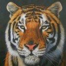 SET of 3 DAVID STRIBBLING Limited Edition Wildlife Prints.