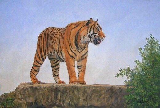 BENGAL TIGER New DAVID STRIBBLING Ltd Ed Wildlife Print.