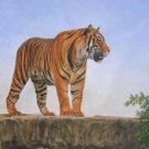 BENGAL TIGER New DAVID STRIBBLING Ltd Ed Wildlife Print.