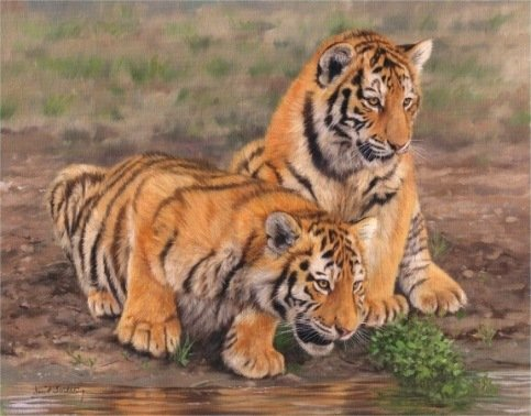 TIGER CUBS New! DAVID STRIBBLING Ltd Ed Print.