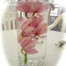 12 Deluxe Cymbidium Orchids Wedding Reception Glass Cylinder Vase Table Centerpieces
