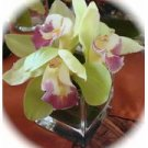 12 Orchids Wedding Reception Square Glass Vase Table Centerpieces - Custom Made To Order