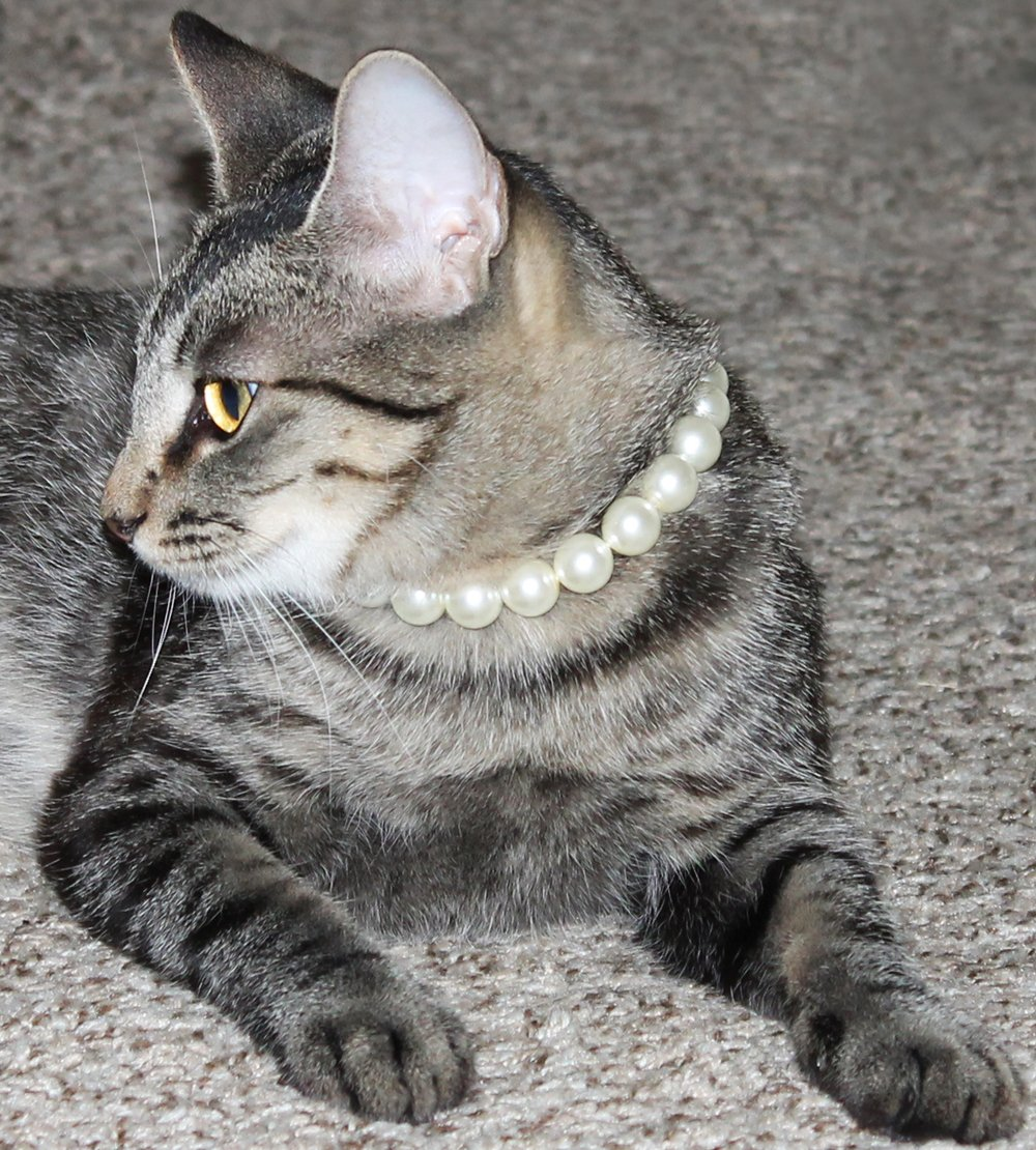 Cat Pearl Necklace with Safety Clasp