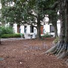 NO 5, 5x7 Print - Fine Art Image Photo Digital, new orleans bourbon st architecture tree courtyard