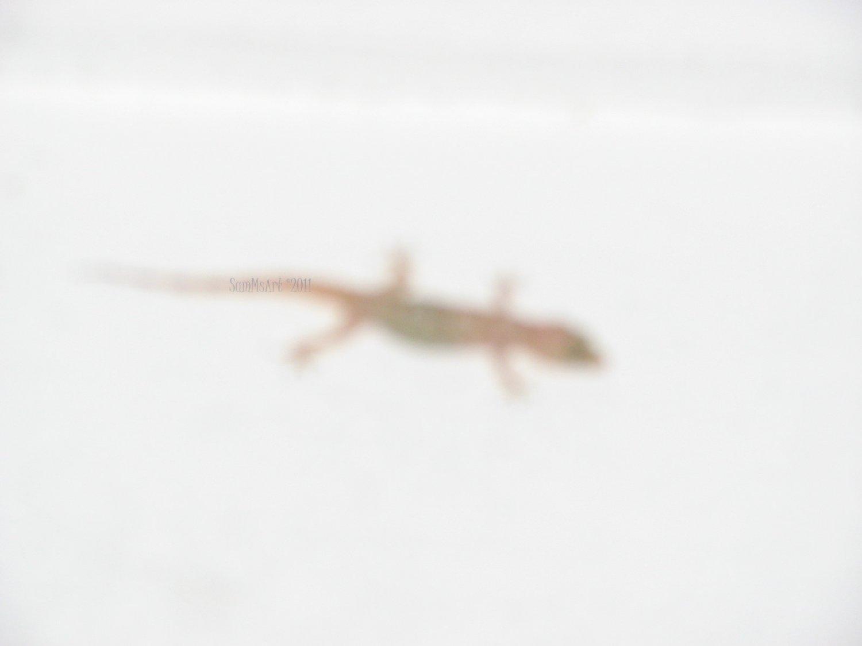 Lizer - 8x10 Print, Digital Fine Art Image Photo - Lizard reptile amphibian white deco abstract