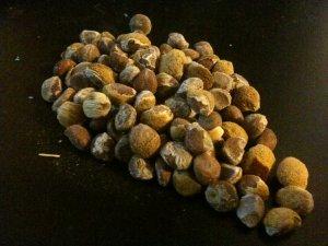 Argyreia Nervosa 50 Argyreia Nervosa Seeds HBWR -HAWAIIAN STRAIN