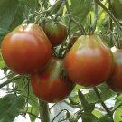 ORGANIC Black Japanese Trifele 25 Seeds HEIRLOOM Tomato