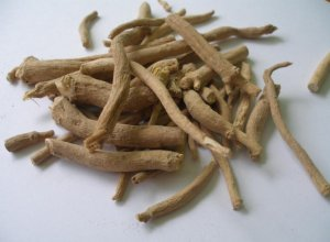 1g SILENE CAPENSIS roots FRESH Xhosa AFRICAN DREAM HERB