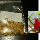Worlds Hottest Pepper 5 Dorset Naga Seeds Bhut Jolokia