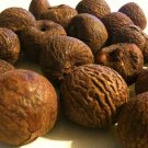 Grade A 12 WHOLE BETEL NUTS Areca Catechu paan nuts