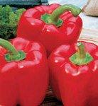 Red Bell Pepper (Capsicum annuum) Sweet Pepper 25 Seeds Big and Juicy Pack Fresh