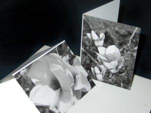 Magnolias in bloom cards