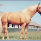 Vintage Postcard HORSE Palomino DEXTER PRESS 1950s