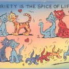 Vintage Postcard CAT Kitten VARIETY IS SPICE OF LIFE