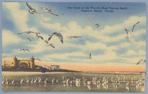 Vintage Postcard SEA GULLS Daytona Beach FLORIDA Linen