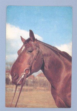 Vintage Postcard ALFRED MAINZER Red Horse 1950s
