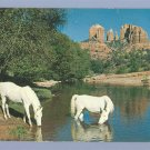 Vintage Postcard OAK CREEK CANYON Arizona HORSE