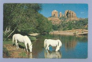 Vintage Postcard OAK CREEK CANYON Arizona HORSE