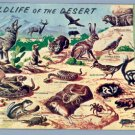 Vintage Postcard PETLEY Wild in South West 1958 LARRY