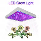 LED Grow Light for Super Harvests (15W Red and Blue Edition)