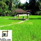 """VLA003201109 - Bali landscape - 28x35cm (11x14"""")"""