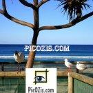 """VAN002201109 - Birds in the Gold Coast - 15x20cm (6x8"""")"""