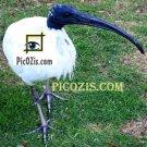 "VAN003201109 - Australian Bird - 15x20cm (6x8"")"