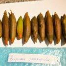Bruguiera sexangula - orange Mangrove seeds X 5 for aquarium and pond salt or fresh waters
