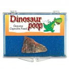 (1) Genuine Dinosaur Poop w/Clear Display Box *Collectible Coprolite Fossil*