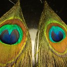 Peacock Feather Earrings Pair