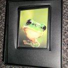 Decorative 360 Night Light In Gift Box : Frog   #090